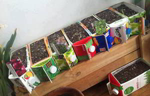 reuse-milk-or-juice-cartons-for-a-raised-bed-urban-garden