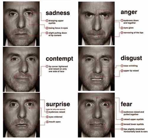 lie detection infographic microexpressions