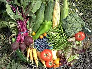 organic CSA farm natural vegetables