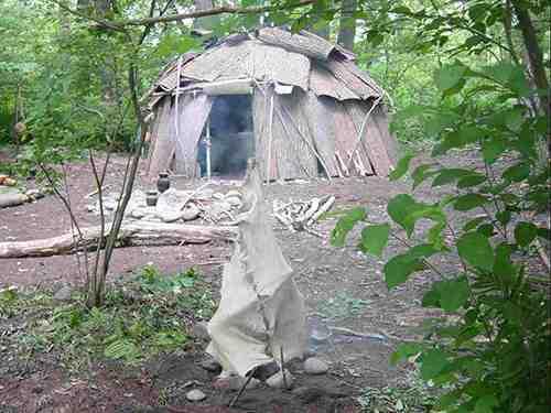 basswood shelter