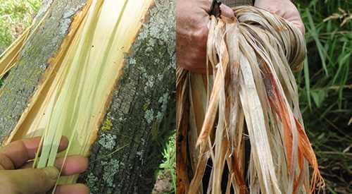 basswood cordage