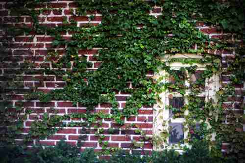 vines on the wall