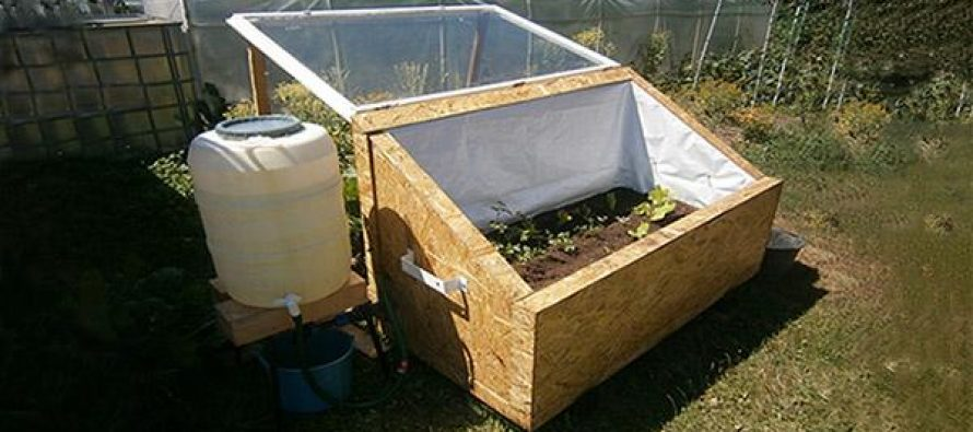 DIY Mini Greenhouse For Year-Round Vegetables
