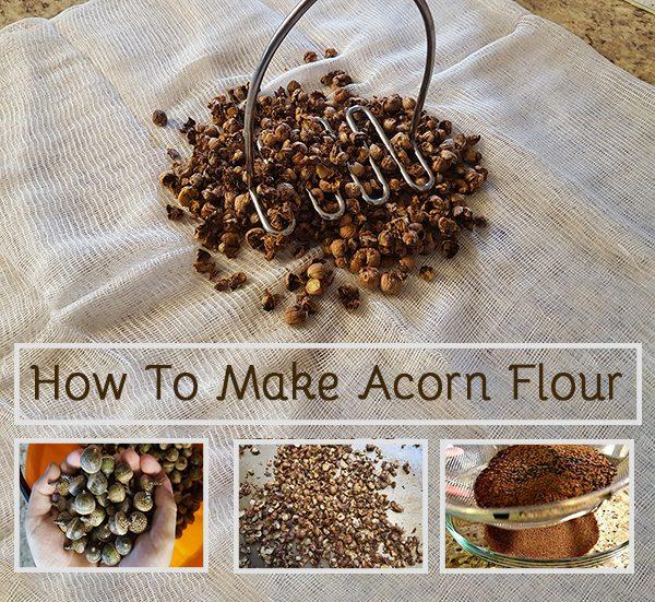 acorn pinterest