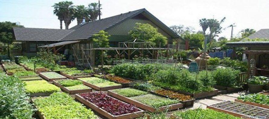 Mini-Farming on 1 Acre