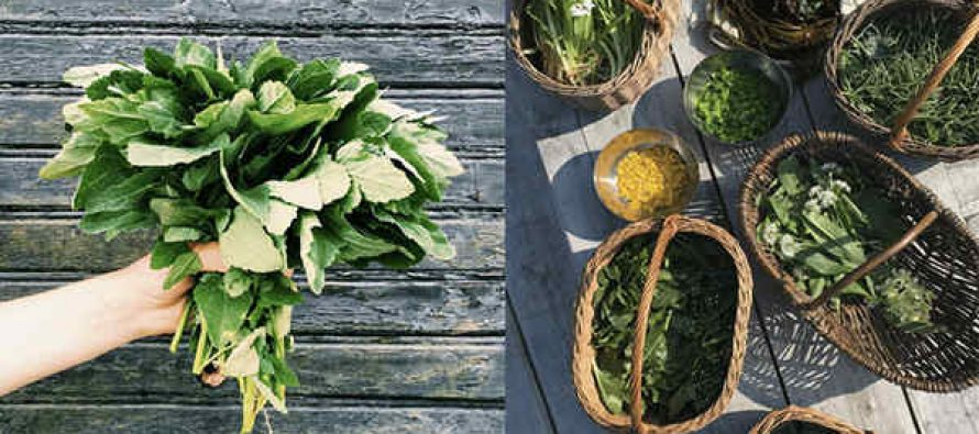 The 5 Most Common Edible Weeds In Your State