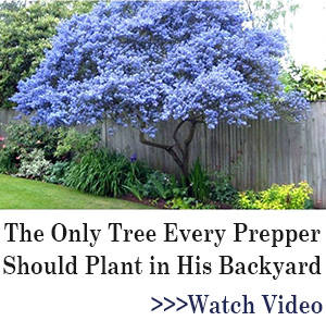 BOR banner The Only Tree Every Prepper Should Plant in His Backyard