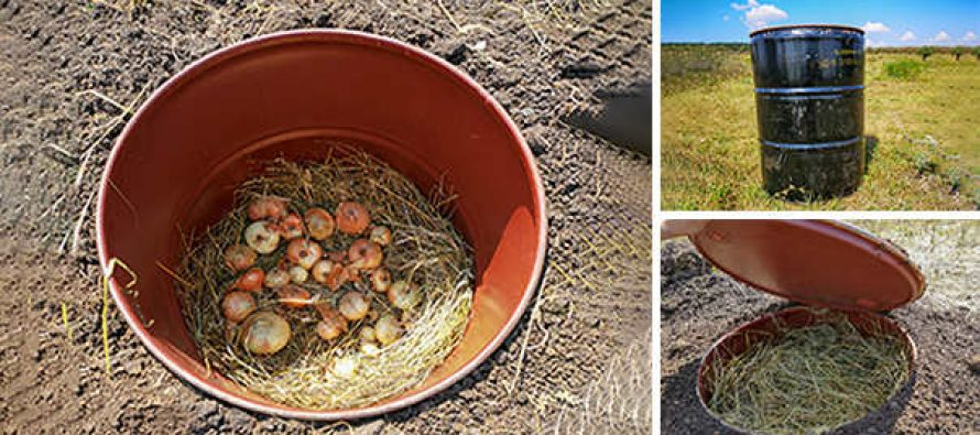 How To Make A Mini Root Cellar In Your Backyard In Less Than Two Hours