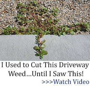 BOR driveway weed