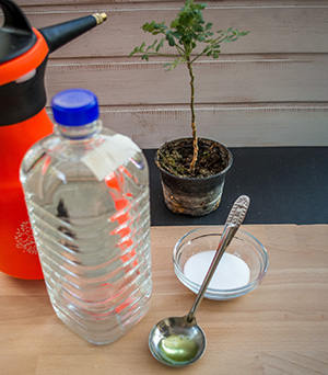 How To Make The Most Effective Homemade Herbicide