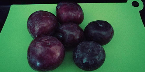 How to Dry Plums for Long-Term Storage Just Like Grandma