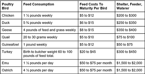 The Best Fowls to Raise for SHTF - Quail, Guineafowl, Chicken, Turkey, Emu costs