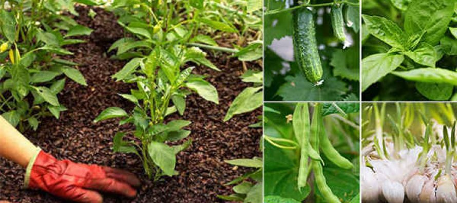 18 Plants That Should Never Be Planted Together