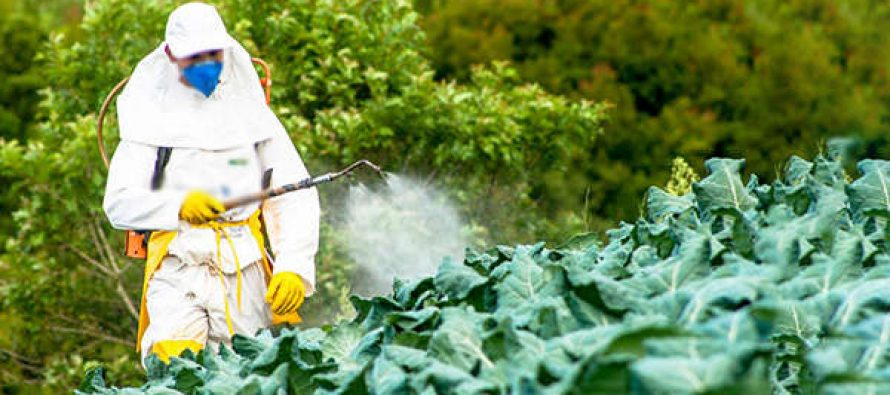 4 Ways to Keep Monsanto Out Of Your Backyard