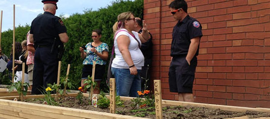 How Growing Your Own Vegetables Can Get You Arrested