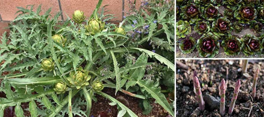 How to Plant a Perennial Food Garden – Fruits & Veggies That Will Keep Coming Back Year After Year