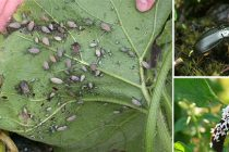 10 Bugs You Should Never Kill In Your Garden