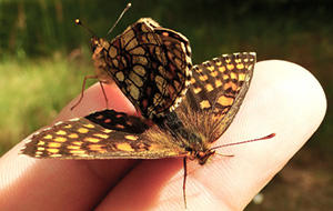 10 Bugs You Should Never Kill In Your Garden butterfly