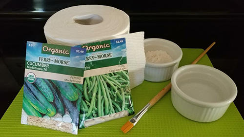 DIY Seed Tapes With Toilet Paper