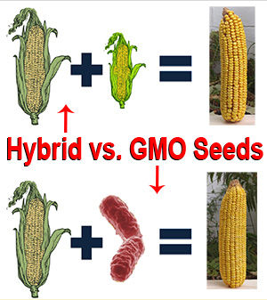 Heirloom Seeds Vs. Hybrid Vs. GMO