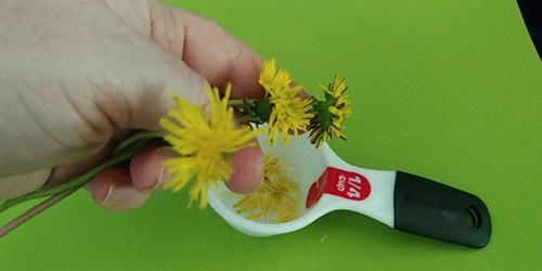 How to Make a Tasty Dandelion Honey Butter
