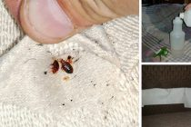 How to Get Rid of Bedbugs Using Household Items