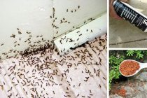 15 Simple Solutions to Help You Get Rid of Ants