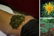 10 Most Powerful Medicinal Plants Used by Cherokees