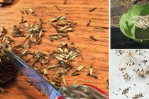 How to Harvest Your Own Seeds from Garden Plants