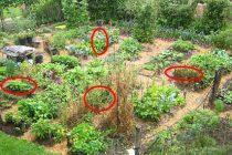 The 24 Highest Calorie Vegetables for Your Survival Garden