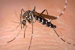 New Deadly Mosquito Borne Virus Claims US Lives – What You Need to Know About EEE