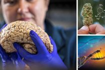 Study: THC Removes Toxic Protein that Causes Alzheimer's from the Brain