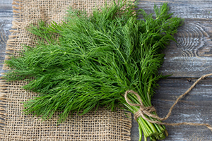 15 Best Herbs for Your Prepper Garden