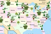 The States with the Most Medicinal Plants. Do You Live in One of Them?
