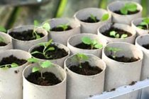 Grow Your Own Toilet Paper