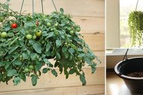 How To Grow Suspended Food Indoors