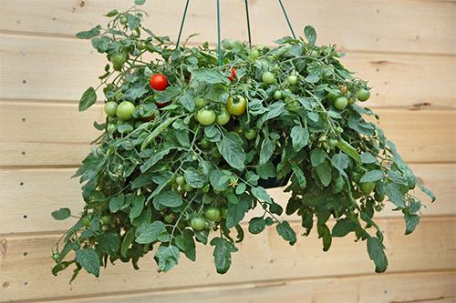 How To Grow Suspended Food Indoors6