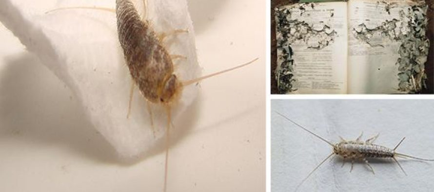 Watch Out for These Toilet Paper Eating Bugs