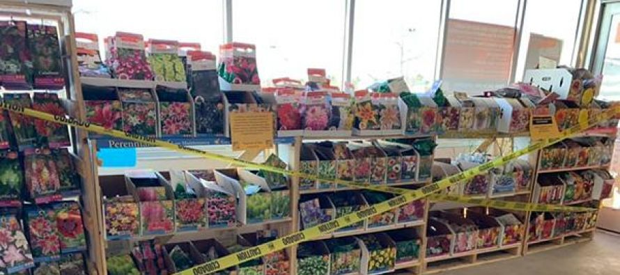 Where You Can Still Find Seeds,  Even Though They are Completely Off the Shelves Right Now