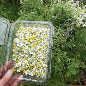 A Medicinal Garden Kit For Starting A Small Backyard Pharmacy