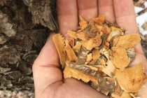 25 Little Known Survival Uses For Tree Bark