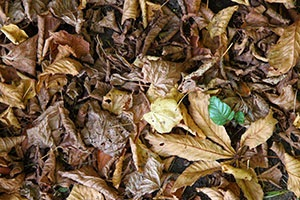 6 Practical Uses for Autumn-Falling Leaves