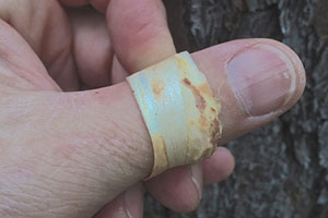Whatever You Do, Don't Chop Down This Backyard Tree