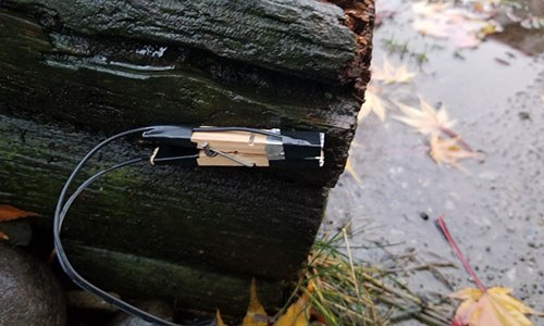 Ingenious Traps You Can Set Up On Your Property To Catch Looters