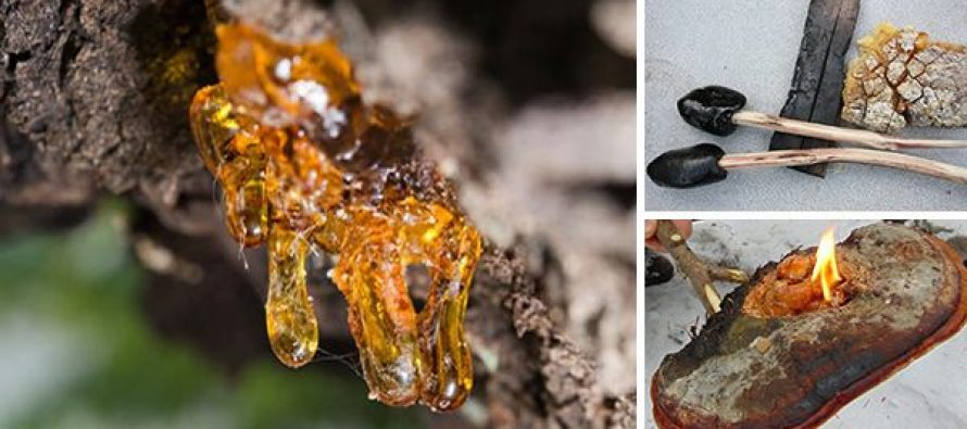 25+ Survival Uses Of Resin