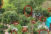 How To Grow A Food Garden Completely Hidden In Plain Sight
