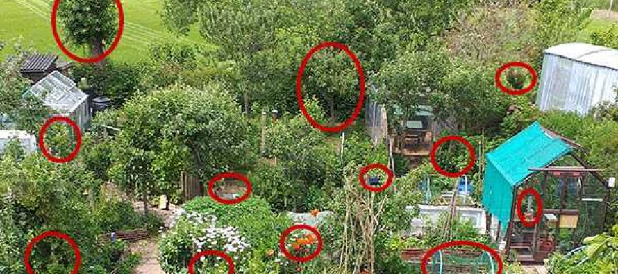 How To Grow A Food Garden Completely Hidden In Plain Sight