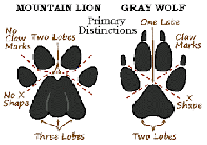 How To Identify Animals By Their Tracks