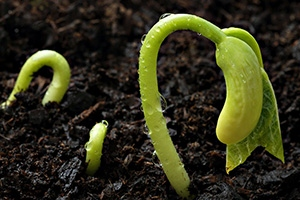 20 Must Have Seeds For The Upcoming Crisis