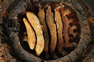 20 Stone Age Foods Every Prepper Should Try